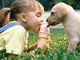 ice cream dog